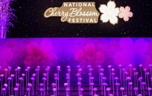 CHERRY BLOSSOM FESTIVAL, PINK TIE PARTY, CHERRY BLOSSOMS, DC, SPRING IN DC, PINK PARTY, RENT THE RUNWAY, DC GALA, PINK TIE
